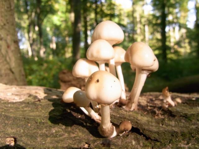 Pilze_auf_einem_Baumstamm