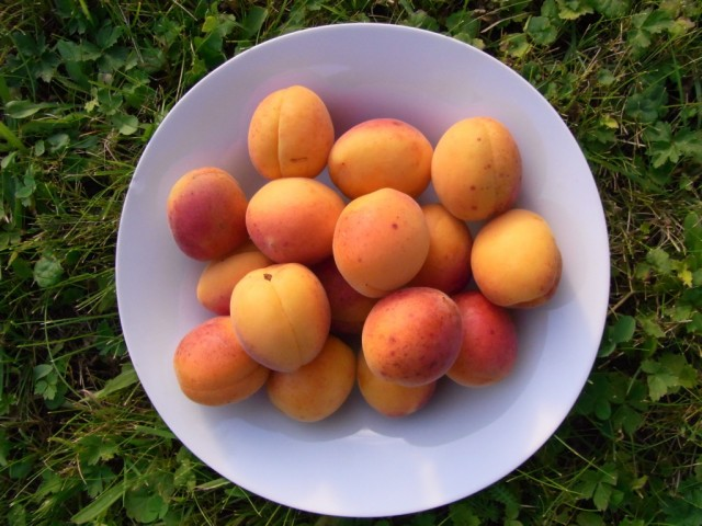 Aprikosen_aus_Frankreich