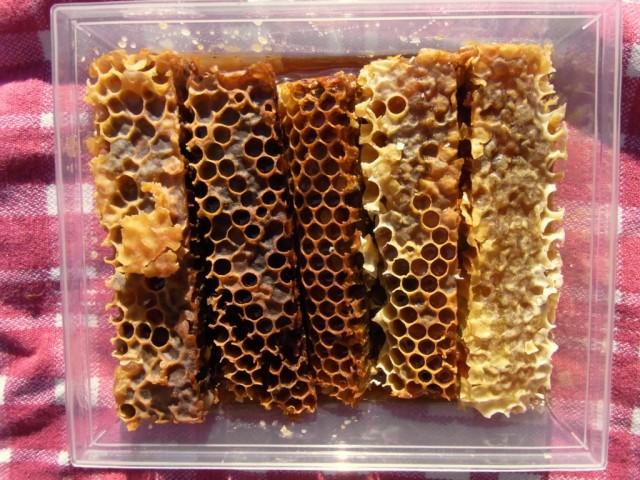 Bienenbrot_Spanien