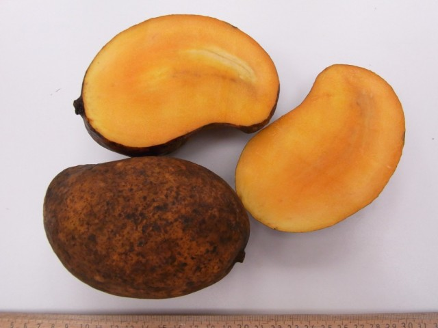 Mango_Rajina_Fruchtfleisch