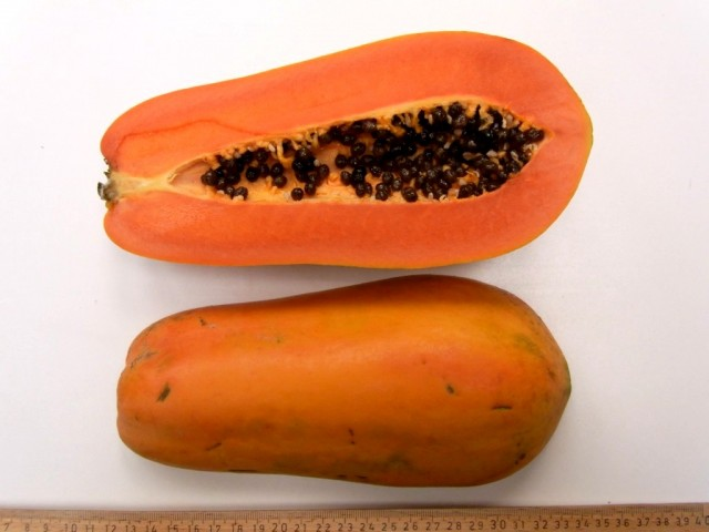 Papaya-Nila