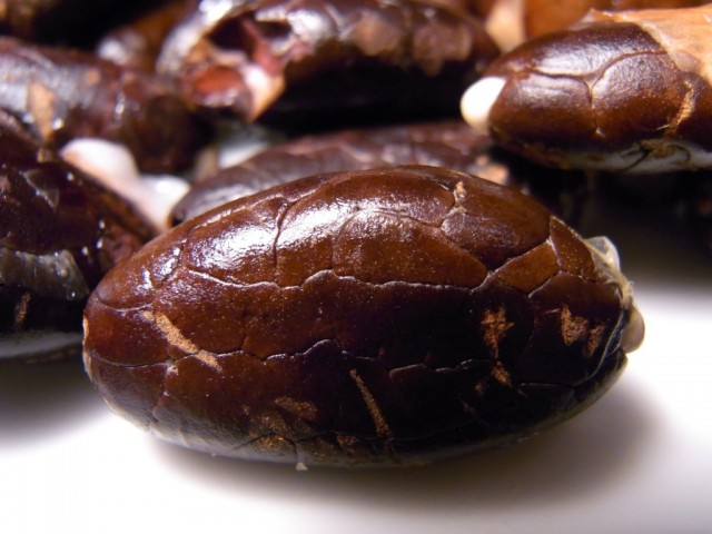 Kakao_Bohne
