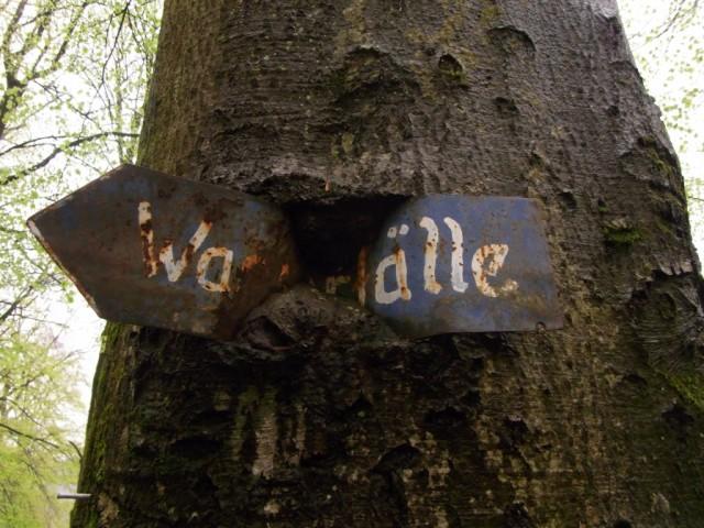 Baum_mit_umwachsenem_Schild
