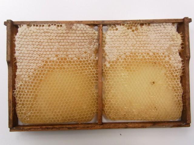 Honigwabe_Fruehsommertracht