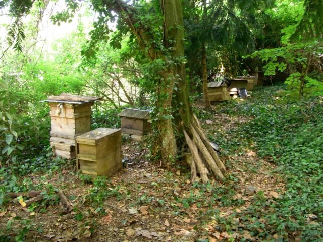 Bienenstoecke_am_Waldrand
