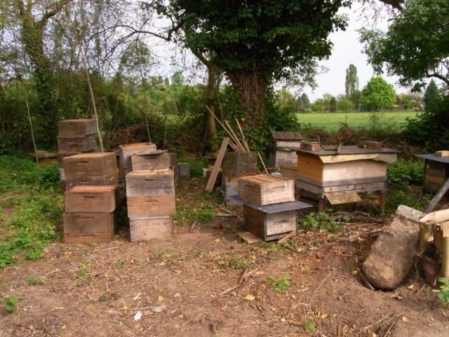 Bienenstoecke_unter_Baeumen