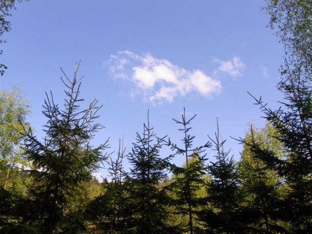 Blauer_Himmel_mit_Wolke_und_Tannen