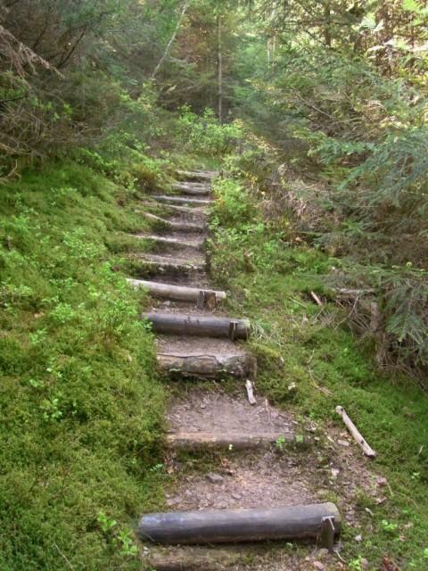 Waldpfad_mit_Stufen