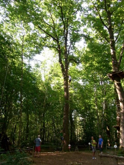 Baum_mit_Klettergriffen