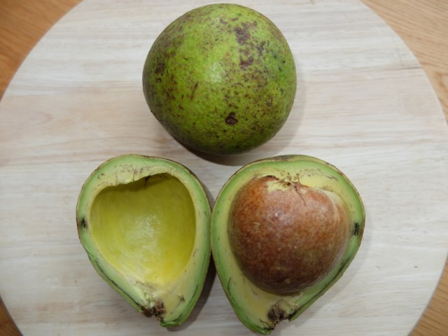 Avocado_Lula_Kamerun