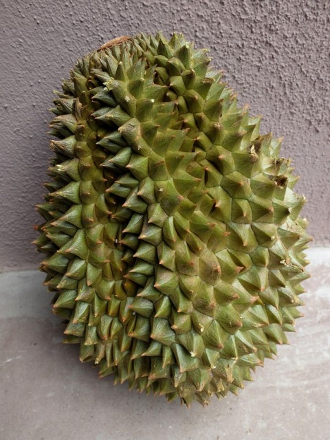 Durian_Chanee_ganze_Frucht