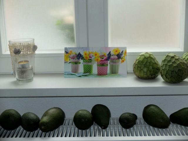 Avocados_auf_der_Heizung