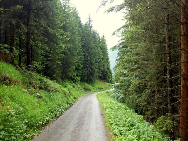 Hornbahn_Abstieg