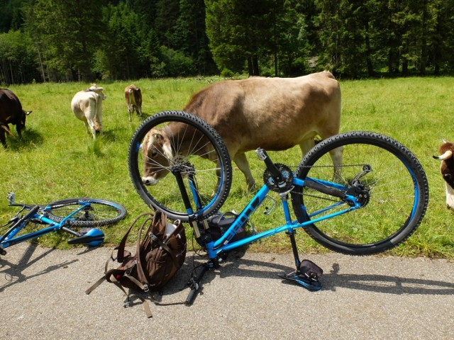 Kuehe_und_Fahrraeder