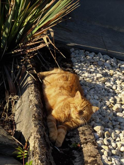 Katze_in_der_Sonne