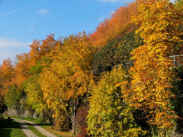 Herbstimpression_4