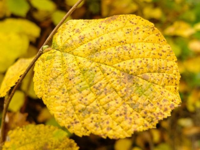 Herbstlaub_1