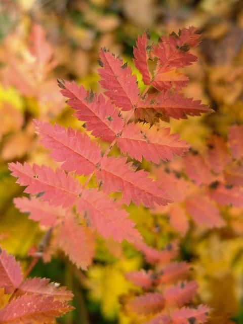 Herbstlaub_3