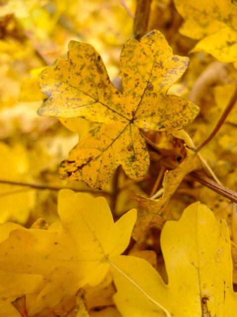 Herbstlaub_4