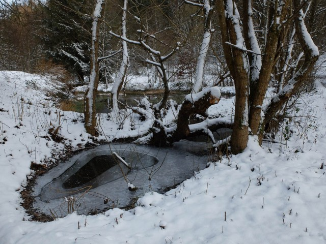 Teich_im_Winter