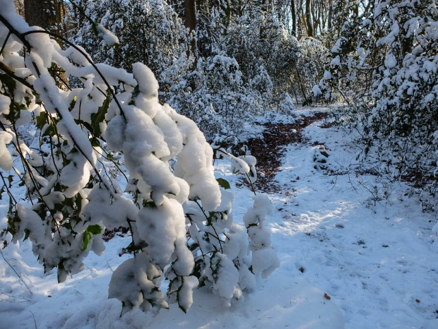 Walddistel_im_Winter