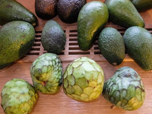 Avocados_und_Cherimoyas