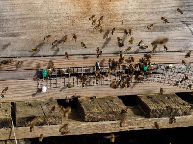 Bienenstock_Einflugloch