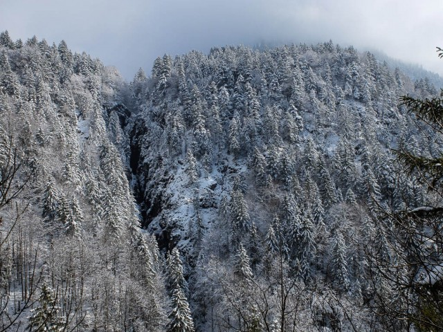 Blick_auf_Hoelltobel_im_Winter