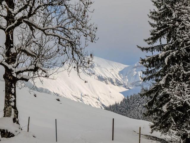 Dietersbachtal_im_Winter_1