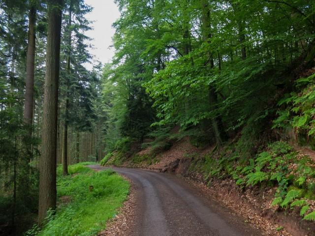 Weisshauswald_Trier