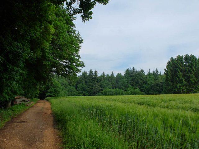 Longuicher_Wald