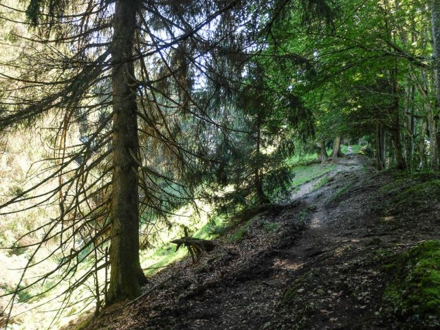 Waldweg_3