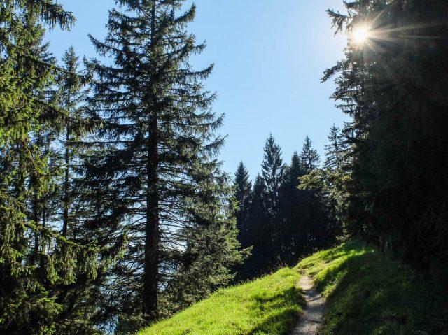 Waldweg_4