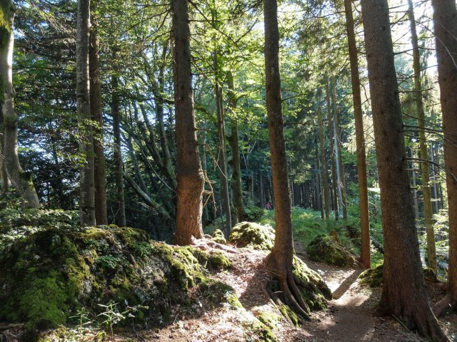 Waldweg_5