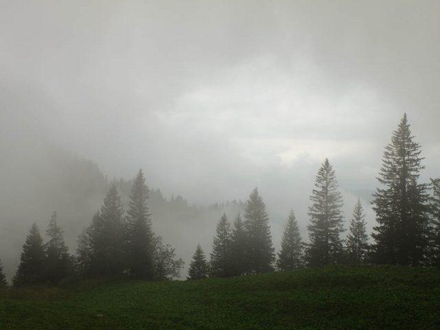 fichten_in_wolken