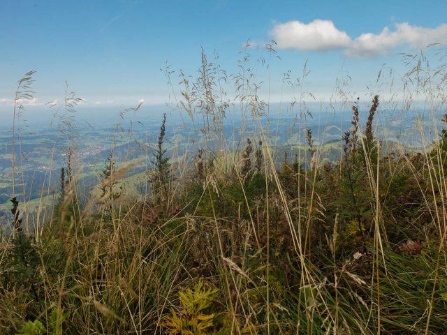hochgrat_vegetation