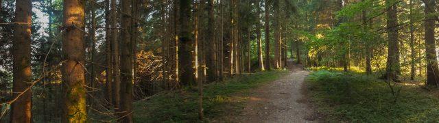 Panorama_Waldweg