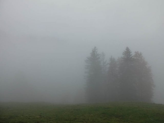 baeume_in_wolken