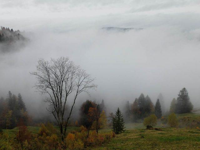 baueme_und_wolken