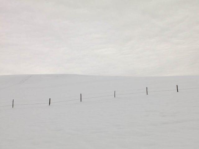 winterliche_weiden_am_kapf_1