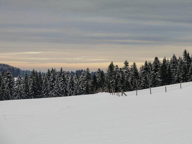 winterliche_weiden_am_kapf_2